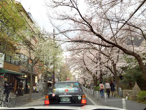京都木屋町の桜トンネル